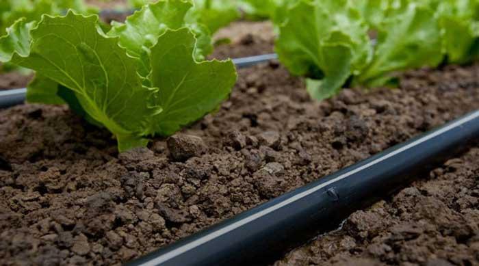 10 съвета за напояване на градината